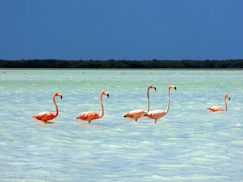 Celestún, plages du Yucatán