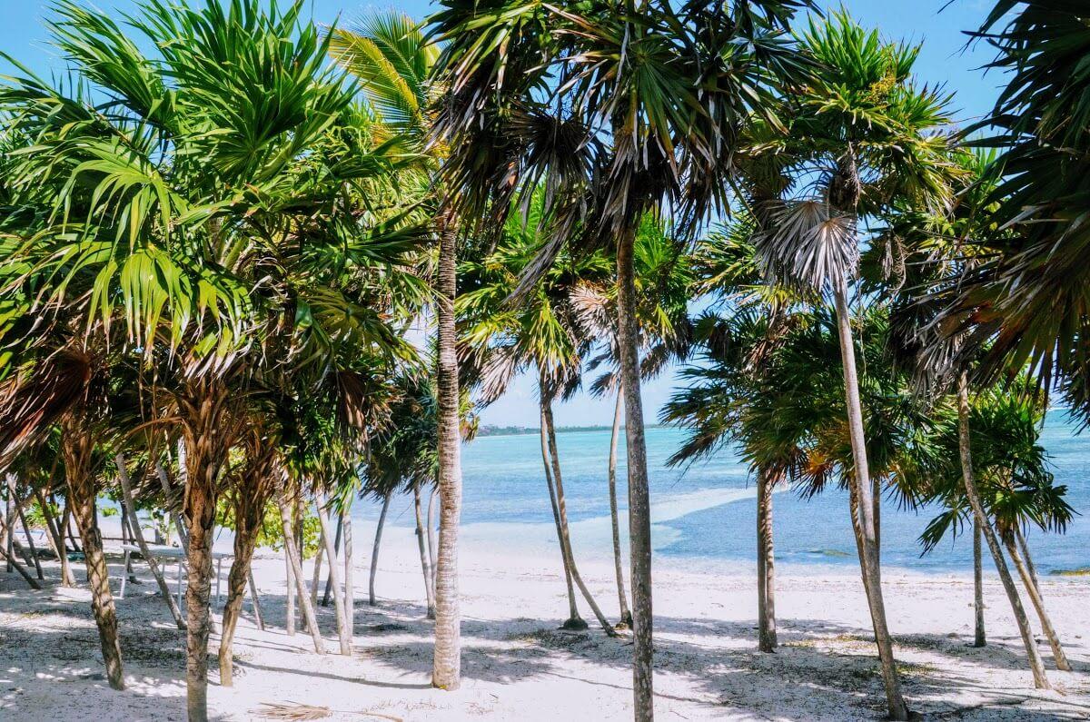 Chamico's, plages du Yucatán