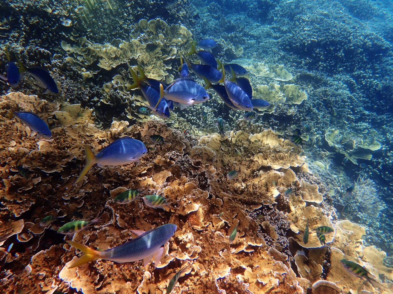 Coraux, plonger à Zanzibar