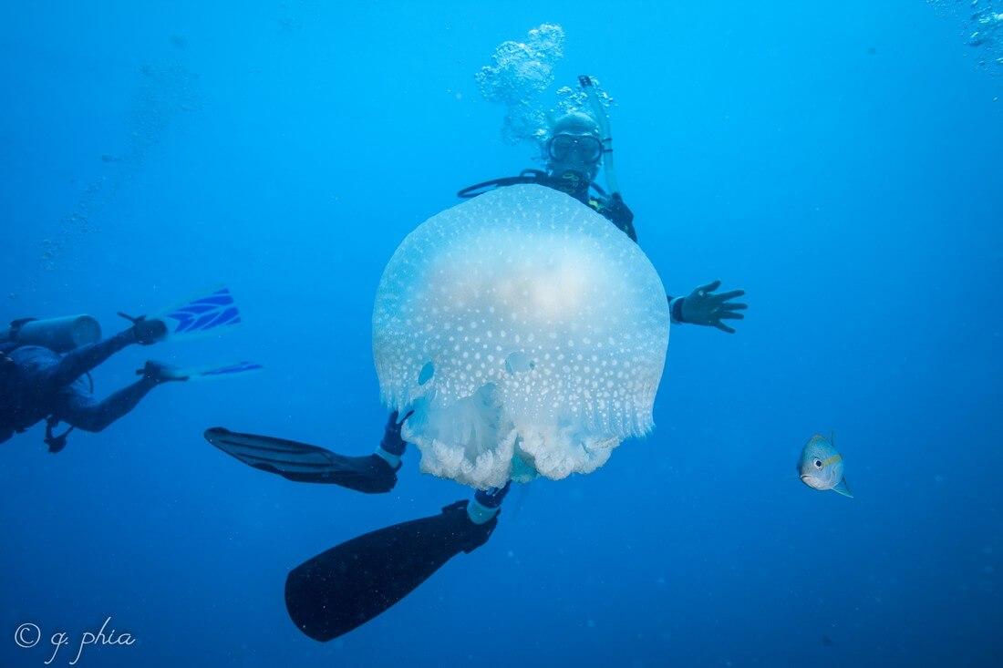 jardines reina plongeur meduse plongée à cuba