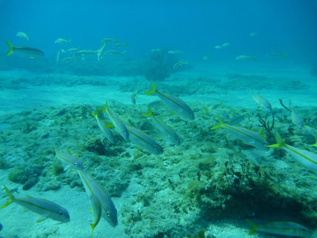 corail poissons plongée à cuba