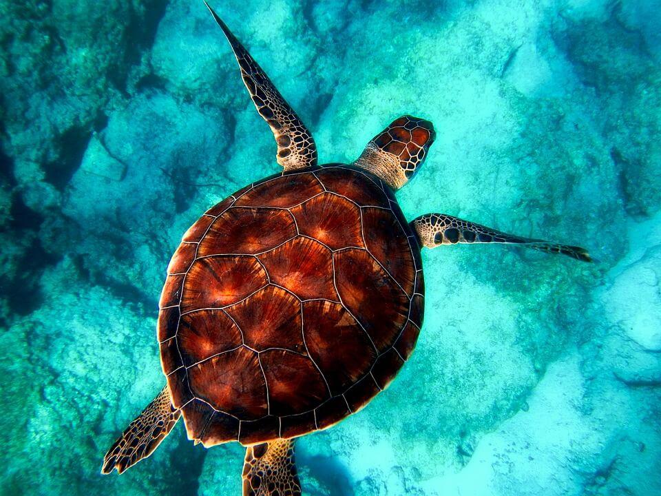 tortue cuba plongée à cuba