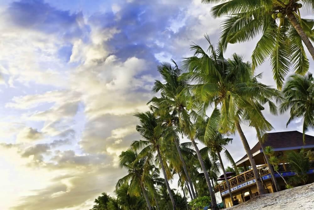 palmiers malapascua philippines plongée aux philippines