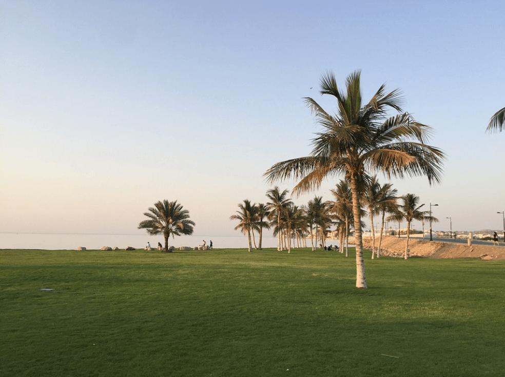 plus belles plages d'oman palmier espace vert