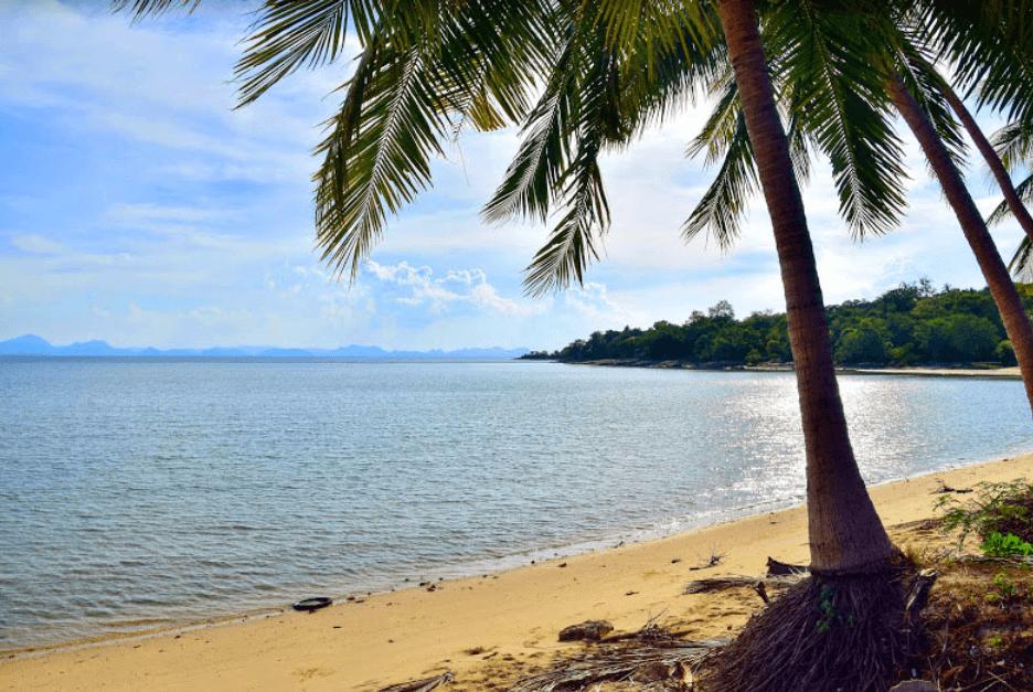 palmier sable doré plage de laem yai plages de koh samui