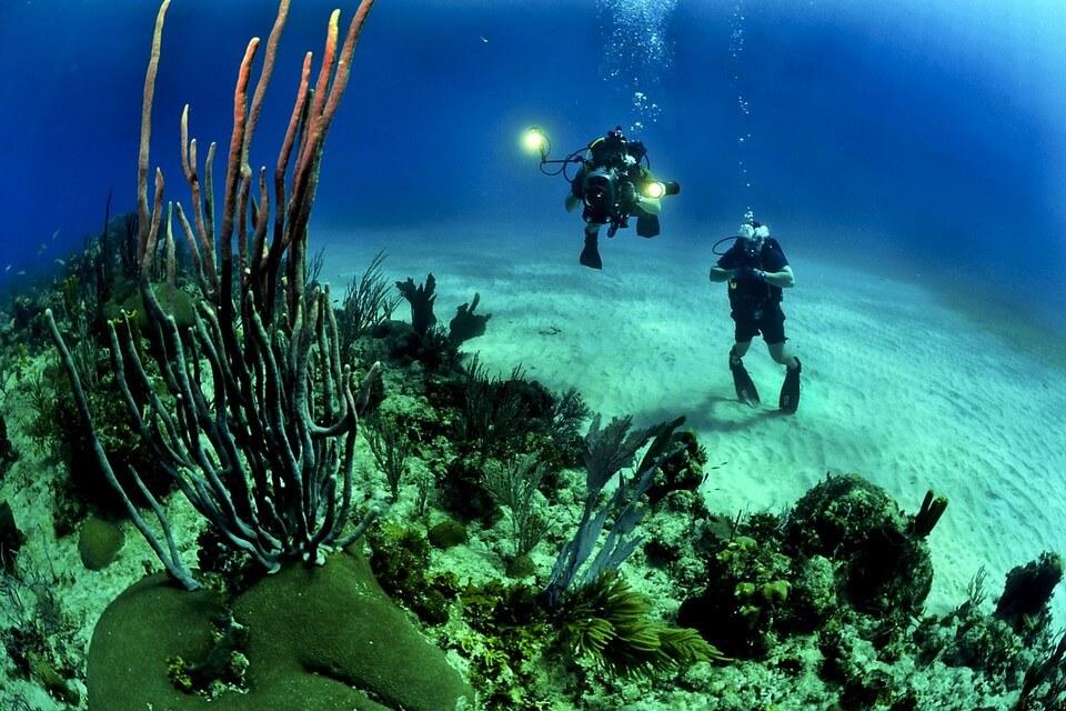 fond marin plongeurs corail plongée en Guadeloupe