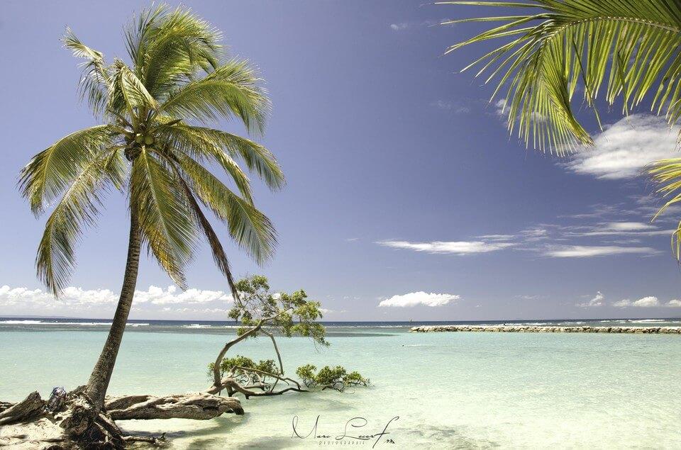 cocotier plage sable blanc plongée en Guadeloupe