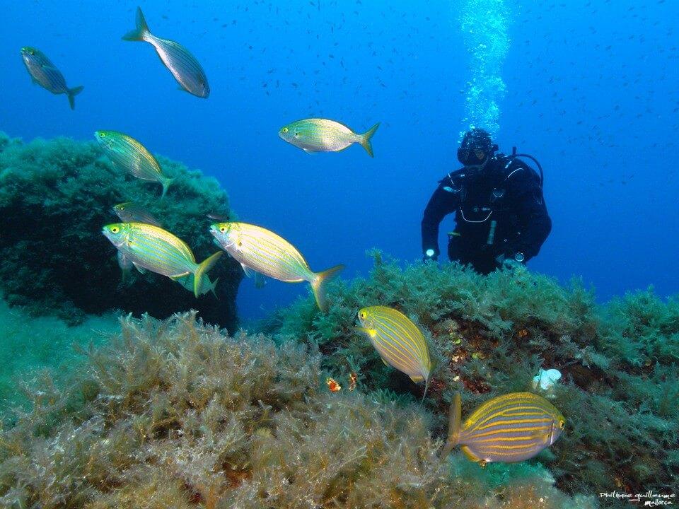 homme plongée poissons plongée à Majorque