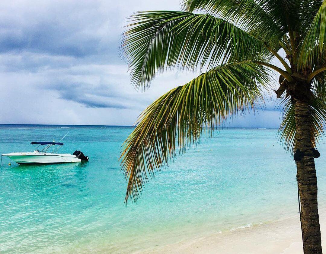 cocotier plage de Trou aux Biches île Maurice