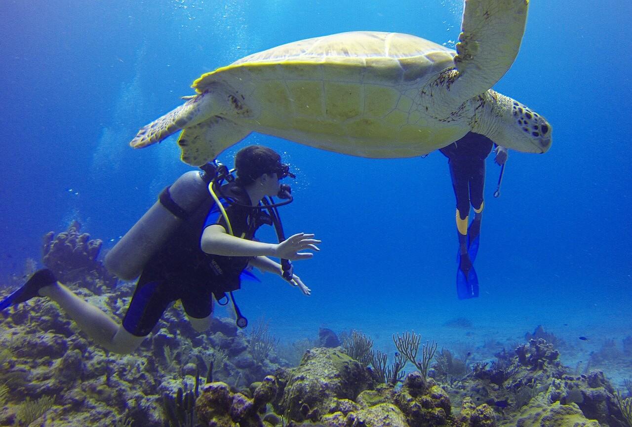 tortue de mer plongee