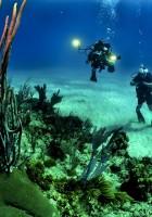 Plongée en Guadeloupe : tout ce qu'il faut savoir (prix, spots, clubs…) !
