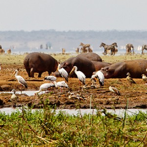 La Tanzanie